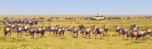 Authentieke safari's in Tanzania Afroriginal