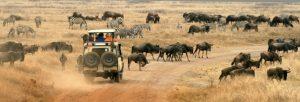Serengeti Migration wildebeest Tanzania