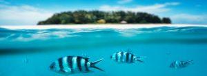 Zanzibar island underwater snorkeling