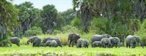 Selous elephants Southern Tanzania safari