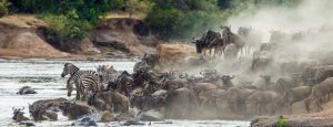 Migration in the Serengeti